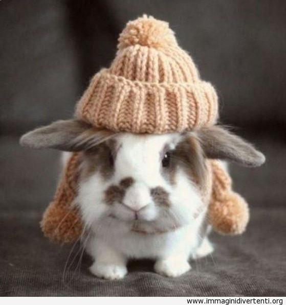 Un coniglio con il cappuccio di lana immaginidivertenti.org