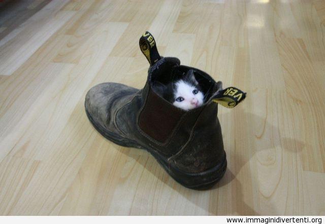 Un piccolo gatto nascosto dentro la sparpa immaginidivertenti.org
