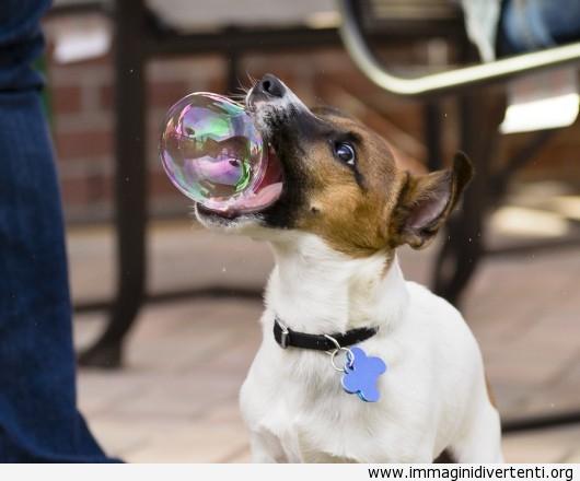 Cane che ha preso una bolla immaginidivertenti.org