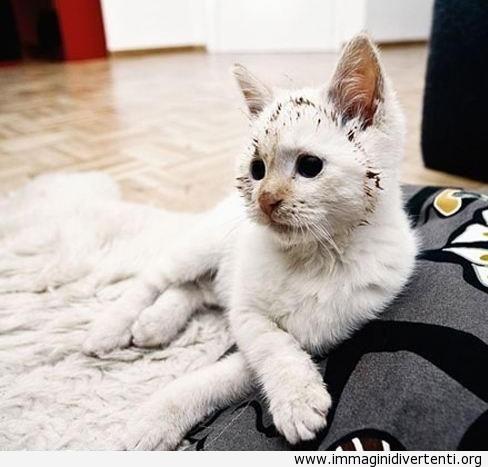 Gatto che ama nutella immaginidivertenti.org