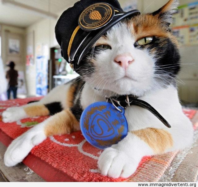 gatto poliziotto immaginidivertenti.org