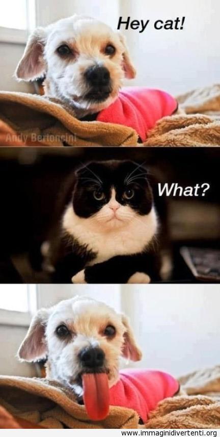 hey gatto immaginidivertenti.org