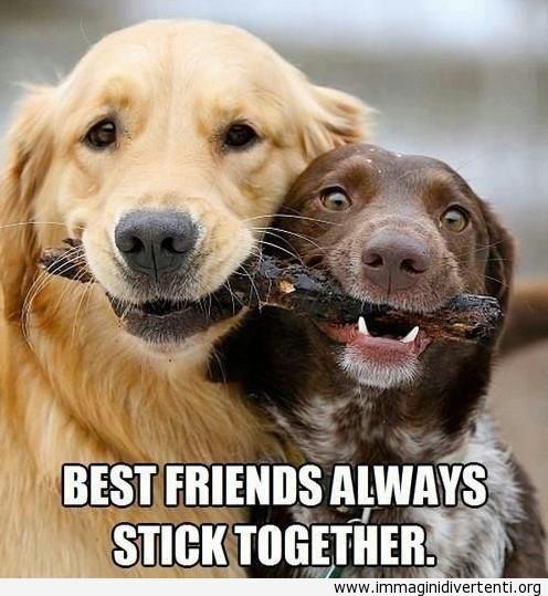 I migliori amici stanno sempre insieme immaginidivertenti.org