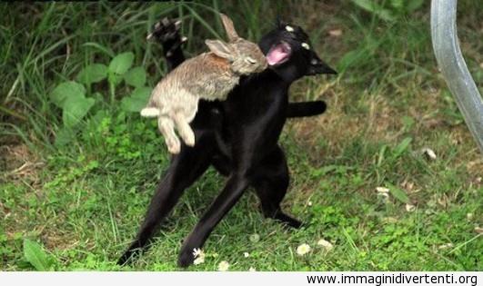 Lepre VS gatto immaginidivertenti.org