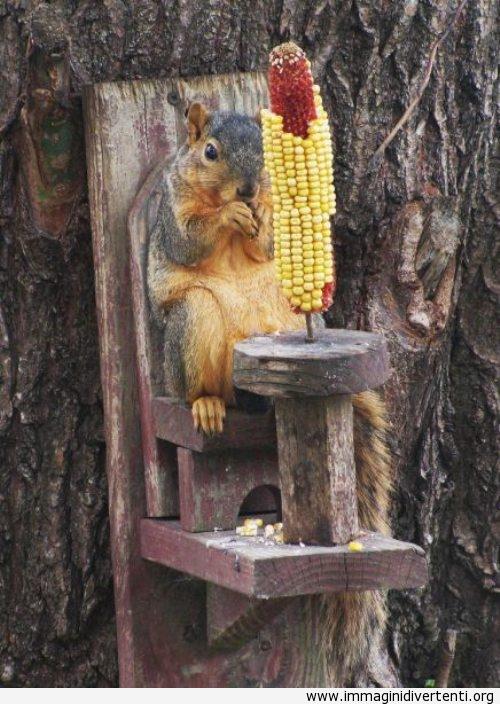 Mangiare i mais come un boss immaginidivertenti.org