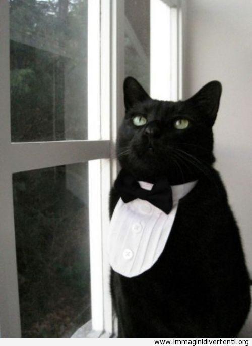mister gatto immaginidivertenti.org