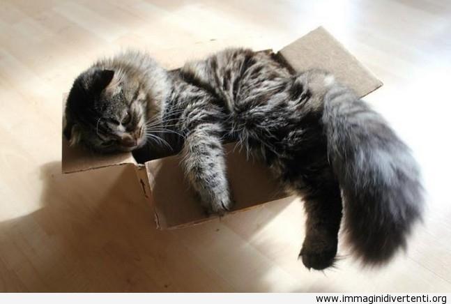 Nel momento in cui si rese conto che lei non è più una piccola gattina immaginidivertenti.org