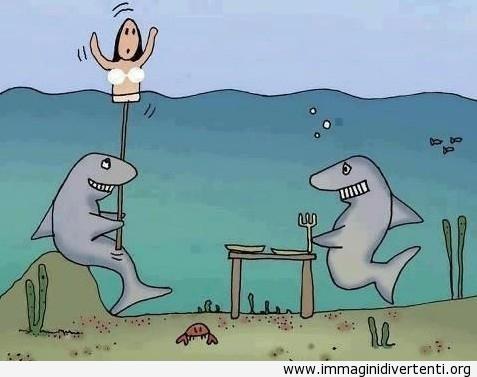 squali intelligenti immaginidivertenti.org