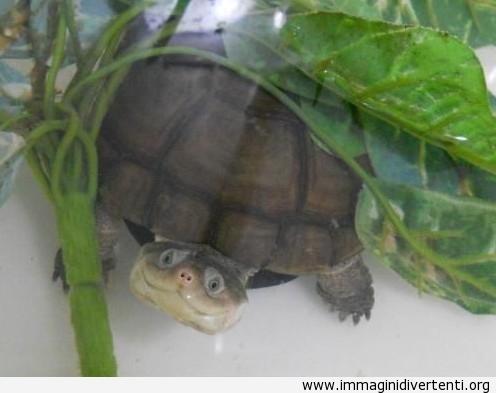 tartaruga felice immaginidivertenti.org