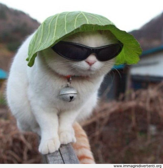 Un gatto con un cappello di lattuga immaginidivertenti.org