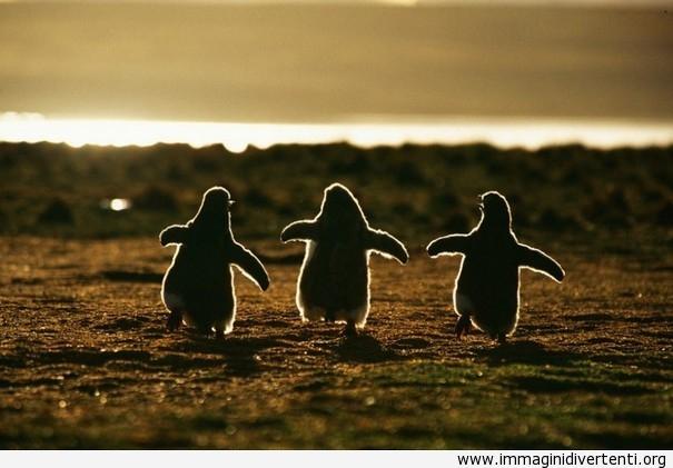 Uscire con gli amici immaginidivertenti.org