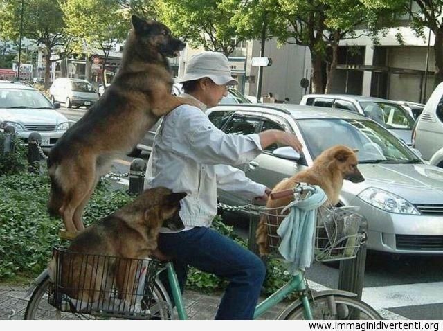 Uscire con i cuccioli in bicicletta immaginidivertenti.org