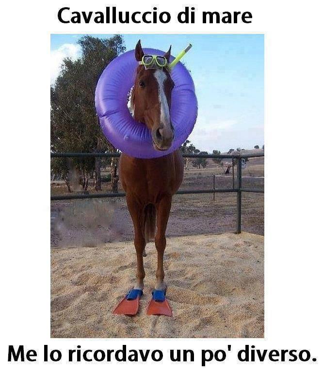 Cavalluccio di mare immaginidivertenti.org