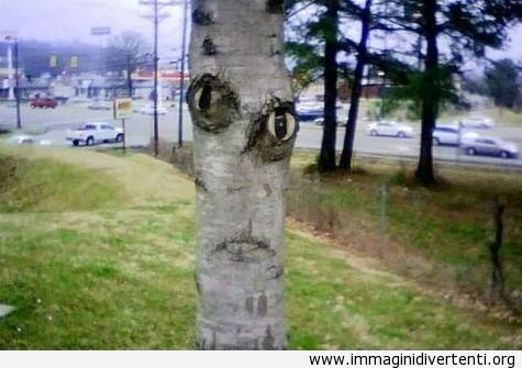 Ciao, sono l'albero immaginidivertenti.org