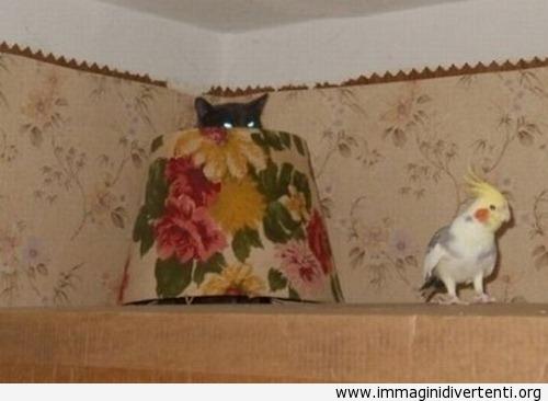 gatto agguato immaginidivertenti.org