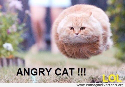 Gatto arrabbiato! Detto abbastanza... immaginidivertenti.org