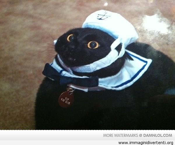 marinaio gatto immaginidivertenti.org
