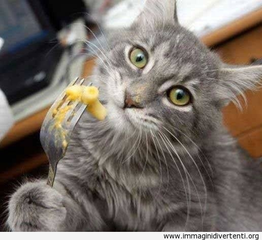 mi-piace-pasta-con-formaggio immaginidivertenti.org