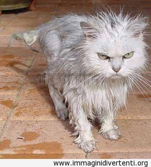 Non mi piace la doccia immaginidivertenti.org