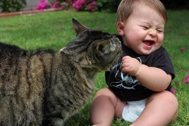 Oh gatto sei così divertente immaginidivertenti.org