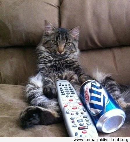 Penso che il mio gatto mi sta prendendo in giro immaginidivertenti.org