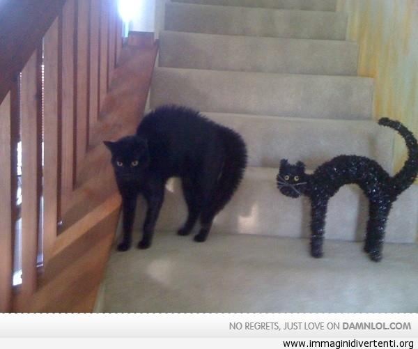 Quindi, il mio gatto assomiglia ad una decorazione di Halloween immaginidivertenti.org