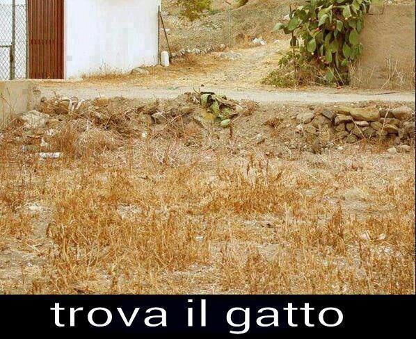 Trova il gatto immaginidivertenti.org