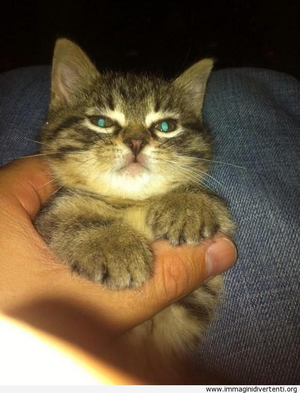 Un carino gattino con gli occhi luminosi immaginidivertenti.org
