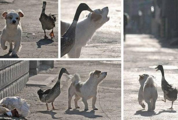 Insoliti amici: Il cane e l'anatra immaginidivertenti.org