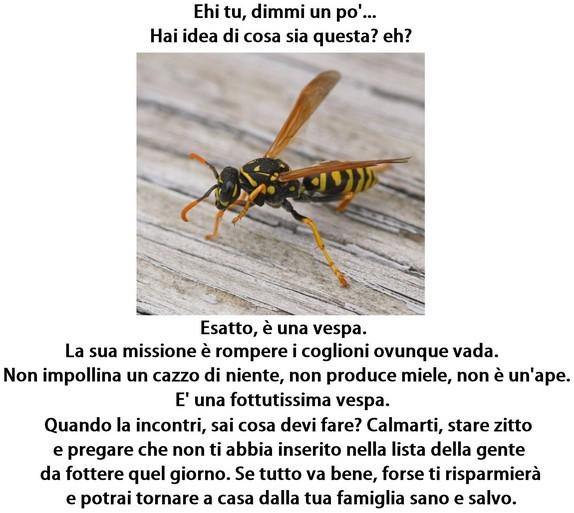 La vespa immaginidivertenti.org